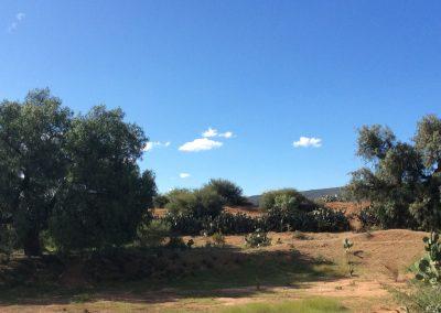 Guanajuato 3&4